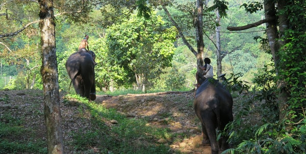 ban chang thai koh chang elephant trekking