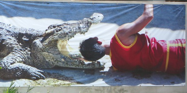 Koh Chang Crocodile and Snake Show