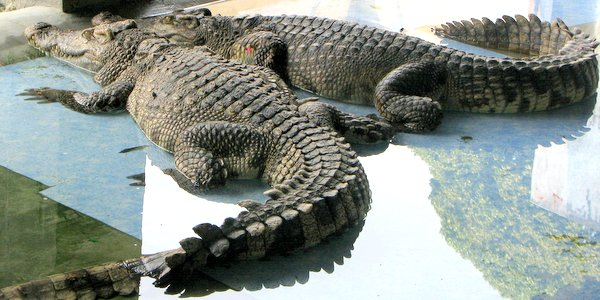 koh chang animal shows dolphins crocodiles snakes