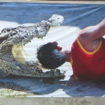 Koh Chang Crocodile Show at Chai Chet