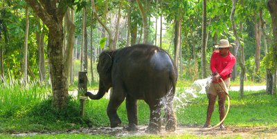 Koh Chang Elephant at Ban Kwan Chang