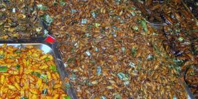 Salak Phet Koh Chang temple fair thai insects